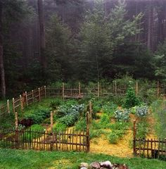 perfect forest garden
