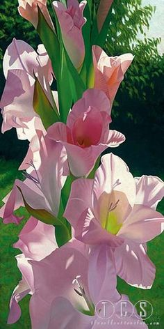 Garden Flowers Katies Gladiola 36 X 18 On Canvas Brian Davis Exotic Flowers, Flowers Nature, Amazing Flowers, Pink Flowers, Beautiful Flowers, Watercolor Flowers, Watercolor Art, Brian Davis, Floral Wall Art
