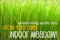 Great kids Earth Day ideas here - including how to do an eco-play audit, and grown your own indoor meadow!