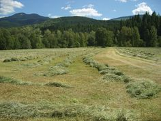 Aveley Heritage Sheep Ranch - Hay for Sale