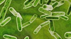 In the disinfecting and antibiotic-heavy society we live in, some doctorssay we are killing good bacteria. KPLC's Britney Glaser reports that's where probiotics come into play, touted to coat our ...