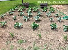 5 Fun Ways to Use Coffee Grounds in the Garden - The Creek Line House