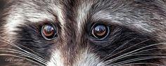 Carol Cavalaris - Wild Eyes - Raccoon