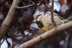 A dreamer finch