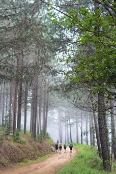 Everything you need to know about the Magoebaskloof Hiking Trail from what to expect, prepare and take along, to how fit you need to be for this hike. Beaches In The World, Countries Of The World, Sa Tourism, Outdoor Photos, Most Beautiful Beaches, Day Hike, Live, Places To See, South Africa