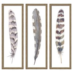 "12""X36"" Framed 3-Pack Feathers"