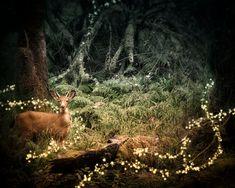 Magical Place Deer Photograph Nature Photography Nursery Art by TreetopPhotoShop Fairy Nursery, Woodland Nursery Decor, Nursery Art, Fantasy Illustration, Landscape Illustration, Woodland Fairy, Woodland Animals, Fairy Tales, Deer