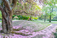 Springtime Fort Vancouver Spring Time, Vancouver, Sidewalk, America, The Originals, Side Walkway, Walkway, Walkways, Usa