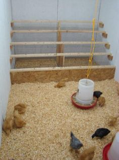 """I really like the design for a """"poop board."""" I think they pull out at the back of the coop. I would have My compost pile nearby so I could pull them out, dump them, and put them back in!"""