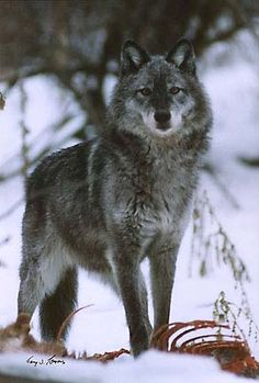 Gerry Lamarre's Wildlife and Scenic Photos - Image #1703