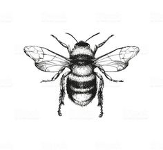 Vector engraving illustration of honey bee on white background Top 60 Honey Bee Clip Art, Vector Graphics and Illustrations - iStock<br> Vector engraving illustration of honey bee on white background Kritzelei Tattoo, Tattoo Drawings, Body Art Tattoos, Small Tattoos, Tatoos, Lotus Tattoo, Hand Tattoos, Sleeve Tattoos, Tattoo Quotes