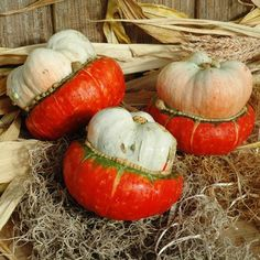 Mini Red Turban  Gourd