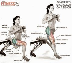 Fitness Anatomy for - Single-leg Split Squats on a Bench. Body Fitness, Fitness Tips, Fitness Motivation, Health Fitness, Butt Workout, Gym Workouts, Workout Tips, Thigh Exercises, Bench Exercises