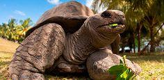 Islas Seychelles: Mahé y Praslin   Kikoy Tours