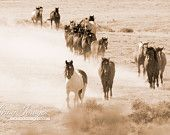 Items similar to Warbonnet Leads the Way II - Fine Art Wild Horse Photograph on Etsy