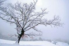 Tree in Winter by EmeraldDust