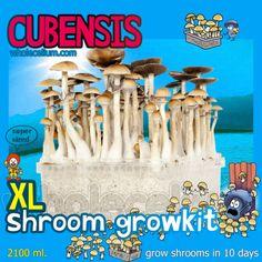 Wholecelium, XL Shroom Growkit (9 types), #psilocybin #shrooms