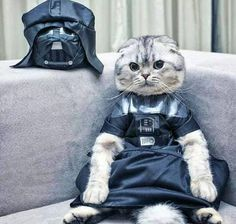Kitteh's Gone To The Darkside.