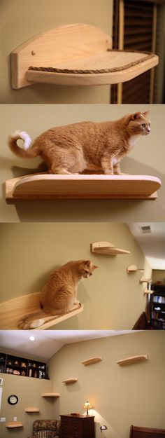 Mountain Cat Climbers for Cats. Wish I could have a cat.