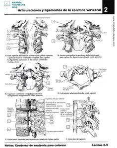 Para colorear sistema esquelético |Miranda Fisioterapia blog Blog, Physical Therapy, Med School, Skeletal System, Cats Humor, Social Science, Human Anatomy, Human Body, Free Coloring