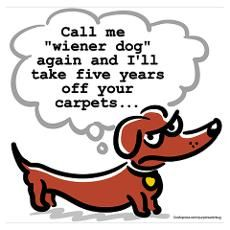Sorry, dachshund. Ok, I'll with the wiener dogs - err, dachshunds - now. Dachshund Art, Funny Dachshund, Daschund, Piebald Dachshund, Funny Dogs, Weenie Dogs, Doggies, Dachshund Puppies, Chihuahua Dogs