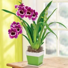 Delicate Beauty Orchid in {productContextTitle} from {brandTitle} on shop.CatalogSpree.com, your personal digital mall.