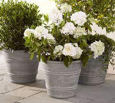 Zubehör für frische Kräuter in einem Pflanzer-gartendekoration