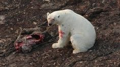 Polar Bear Poop Tracker - Tested.com