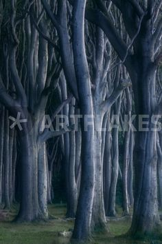 """""""Wald-Geister"""" Photography by moqui buy now as poster, art print and greeting card. Canvas Prints, Art Prints, Buy Posters, Sell Your Art, Buy Now, Greeting Card, Trees, Plants, Photography"""