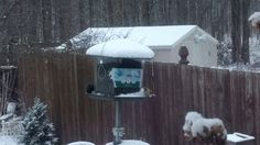 Backyard Birds Feeding on a Blustery Winter Day Tufted Titmouse Goldfinc...