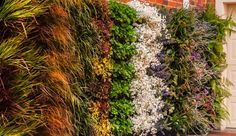 como hacer un jardin vertical en casa