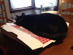 """""""Ahhh, ¿la pizza es para comer? Bueno, ahora es para dormir. Adiós""""."""