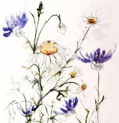June Rydgren Blog: Baldr's Brow and Cornflower