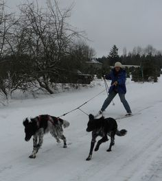 Skijoring with Pixel and Arrow