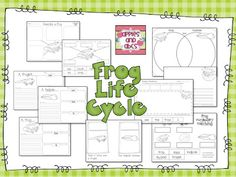 Life Cycle of a Ladybug FREEBIE!