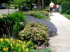 """Another great pic of a """"Hellstrip"""" garden. See Evelyn Hadden's new book, """"Hellstrip Gardening"""" from Timber Press. This is in Boise ID Sidewalk Landscaping, Home Landscaping, Garden Wedding, Wedding Decor, Beautiful Streets, Great Pic, Garden Inspiration, Garden Ideas, Crochet Hair Styles"""