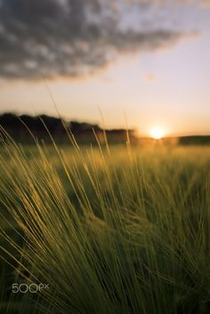 Golden Wheat - Agrarian field in the summer evening. Desktop Background Pictures, Background Images For Editing, Photo Background Images, New Backgrounds, Blurred Background, Photoshop For Photographers, Photoshop Photography, Landscape Photography, Hd Background Download