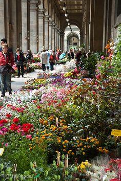 Flower Market at Piazza della Repubblica in Florence, Italy (Photo Credit Hilofox via Flickr)