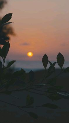 Cool Pictures Of Nature, Beautiful Photos Of Nature, Nature Photos, Scenery Wallpaper, Summer Wallpaper, Nature Story, Night Sky Photos, Ariana Grande Drawings, Aesthetic Photography Nature