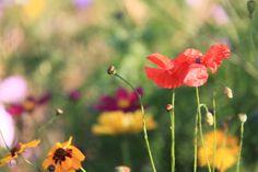 Wild flowers Bij Neeltje