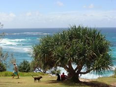 Best place for a holiday, would love to live here when we retire. Point Lookout at North Stradbroke Island. Plus try the beaches on Straddie Australia Day, Australia Living, Australia Travel, Stradbroke Island, Point Lookout, Picnic Spot, Sunshine Coast, The Locals, Wildlife