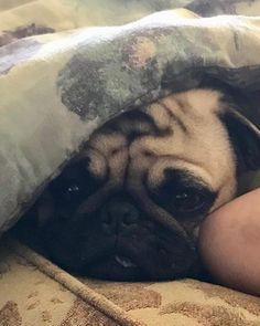 Saturday afternoon nappy time #naptime #pugnap