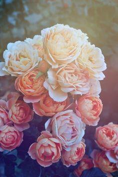Die Blüten der Ranunkeln strahlen mit der Sonne um die Wetter.