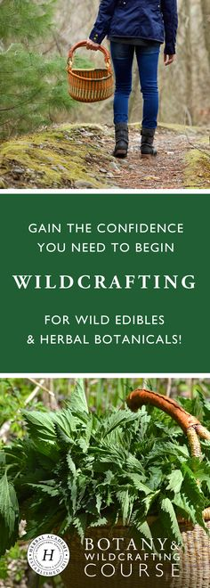 If foraging piques your interest but you lack the confidence to identify wild edibles and herbal botanicals yourself, let us ease your concerns by equipping you with the skills, confidence, and resources you need to bring out the botanist and wildcrafter inside you!