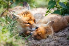 Mother Care by Pim Leijen on 500px