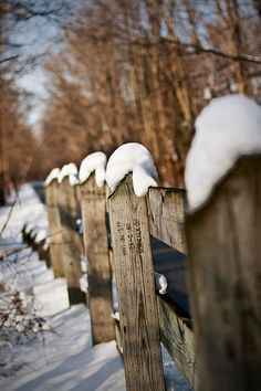 rustic winter fence