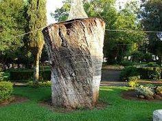 Resultado de imagem para Imbuia árvore
