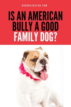 The American Bully dogs are recently developed breeds of dog. They are thick, beautiful, impressive muscular dogs with a great disposition. [LEARN MORE]