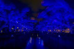 Takashi Kitajima's Dazzling #Bokeh #Photography of #Tokyo. http://illusion.scene360.com/art/79071/takashi-kitajima-photography/