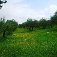 Eliris olive grove Greece, Mountains, Nature, Travel, Greece Country, Naturaleza, Viajes, Destinations, Traveling